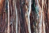 Detalhe de uma casca de árvore velha com rachaduras e buracos — Foto Stock