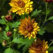 Stock Photo: Yellow Flowers Brightly Lit