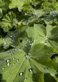 Rain drops on leaf — Stock Photo
