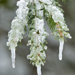 Ice formations on mountain tree — Foto Stock #8504375