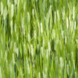 Green wheat — Foto Stock #8504856