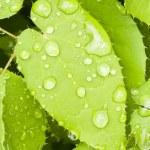 Makro von einem grünen Blatt mit Regen fällt — Stockfoto