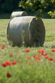 Round Bales of hay on a poppy flower meadow — Stock Photo