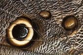 Detalj av ögat sömlösa på en tropisk fjäril vinge — Stockfoto