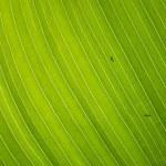 grünes Blatt — Stockfoto #9703177