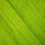 grünes Blatt — Stockfoto #9703189