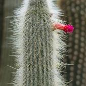 Succulent plant — Stock Photo