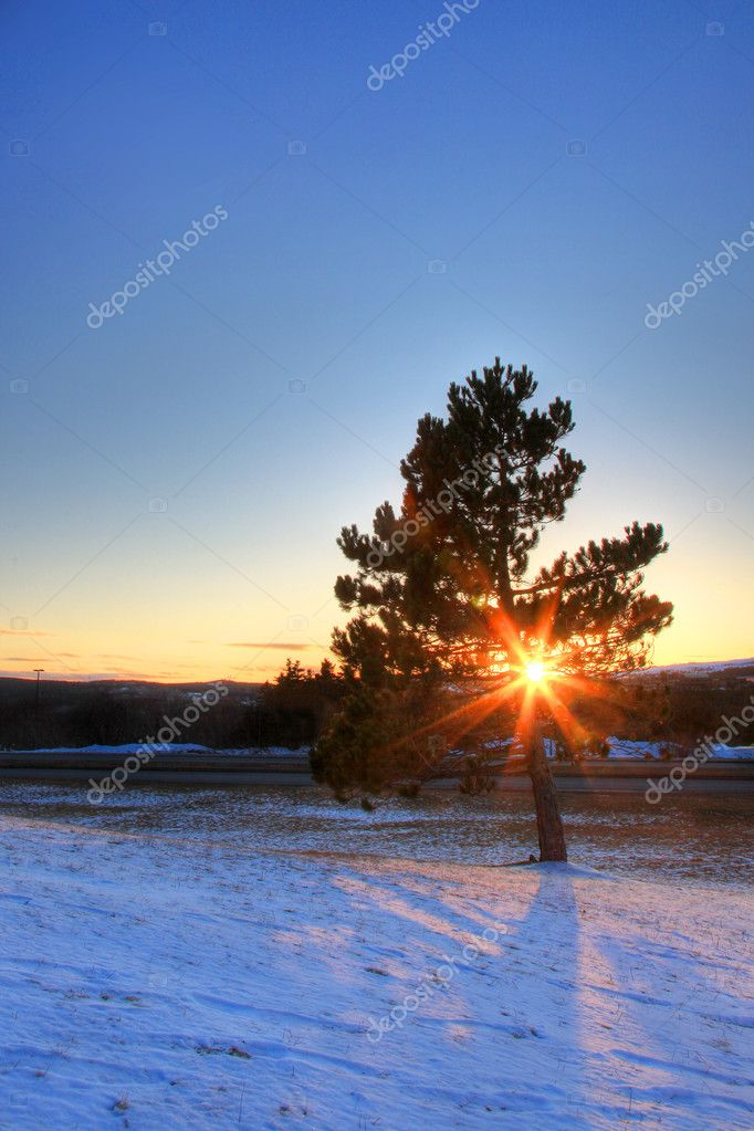 A tree in snowy field at sunset. — Stock Photo #8606870