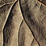 Dry yellow leaves — Stock Photo
