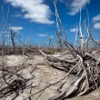 Lot of dry branches — Stock Photo