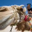 Ride on the camel — Stock Photo #8582988