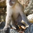 Monkey — Stock Photo