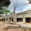 Stock Photo: Giant trees in angkor wat