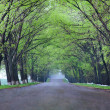 Back country road - 