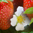 Strawberries - Foto de Stock