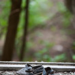 Abandoned pair of children's sandals - Stock Photo