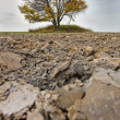 Lonely fall tree - Stock Photo