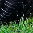 Wheel on the grass - Photo