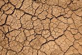 Texture du sol — Photo