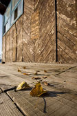 Falling leafs — Stock Photo