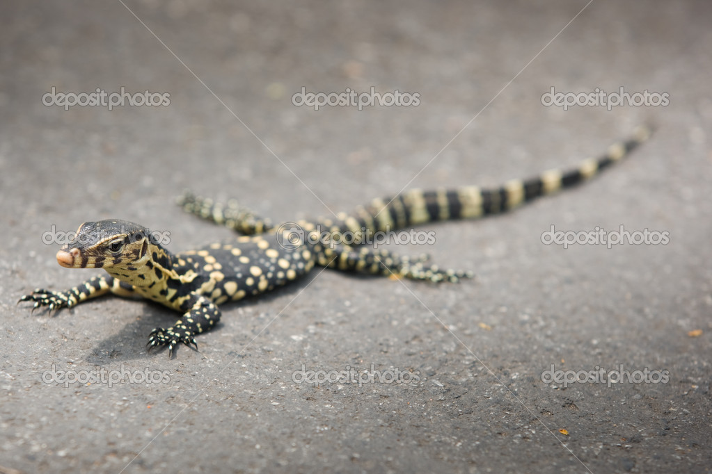 Small giant on asphalt background — Stock Photo #8584144