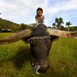 Girl on yak - Stock Photo