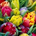 Bouquet of tulips — Stock Photo #9525393