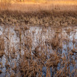 Wetlands after wintertime — Stock Photo