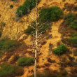 Photo of bare tree in desert - Stock Photo