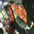 Photo of fence with cactus and graffiti - Stock Photo