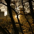 Sunset in Central Park — Stock Photo #8449659