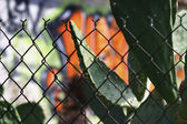 Photo of fence with cactus and graffiti — Stock Photo