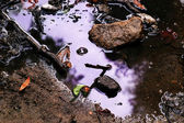 Purple puddle — Stock Photo
