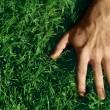 Hand on Grass — Stock Photo