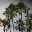 Storm and palm trees - Stock Photo