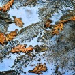 Leaf's in Puddle - Stock Photo