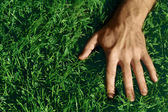 Hand on Grass — Stock Photo