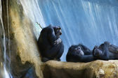 Resting monkeys — Stock Photo