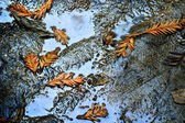 Leaf's in Puddle — Stock Photo