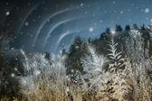 Northern Lights at Christmas — Stock Photo