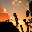 Palm trees - Stockfoto