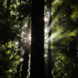 Tree and Light -  