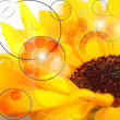 Flower Abstraction - Stockfoto