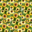 Sunflower Grid - Stock Photo