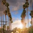 Palm trees on residential street — Stockfoto