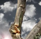 Ossos — Fotografia Stock