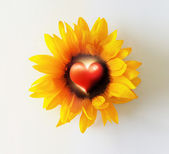 Heart Flower — Stock Photo