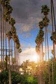 Palmen auf wohnstraße — Stockfoto