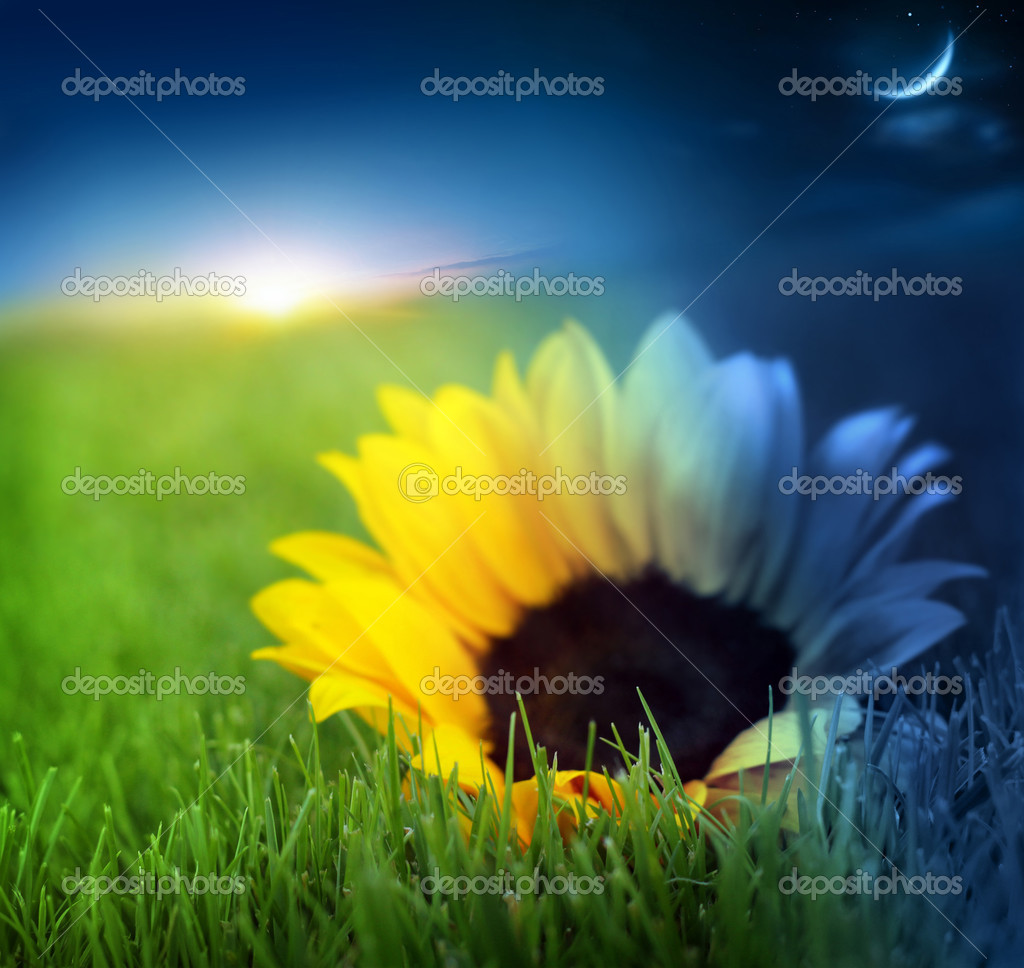 Day and night conceptual image of grass and flower in time transition — Stock Photo #8500634