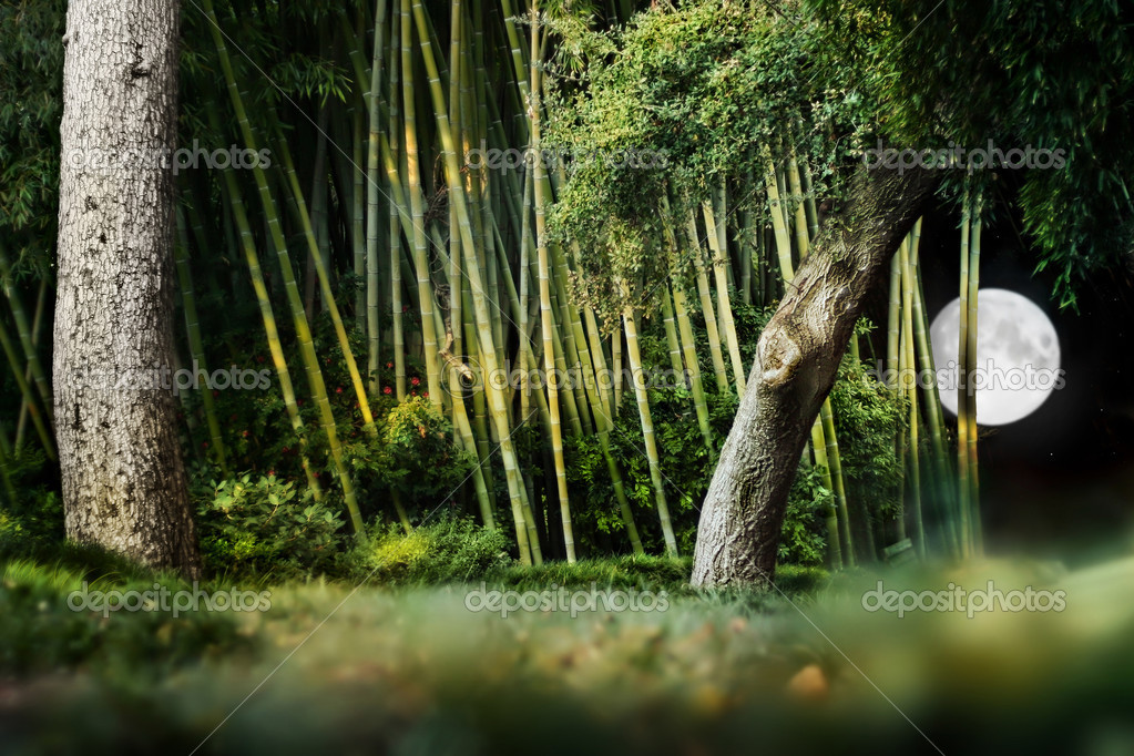 Surreal night landscape composition of a Japanese garden with trees, bamboo and bright moon in night sky.  Stock Photo #8501796